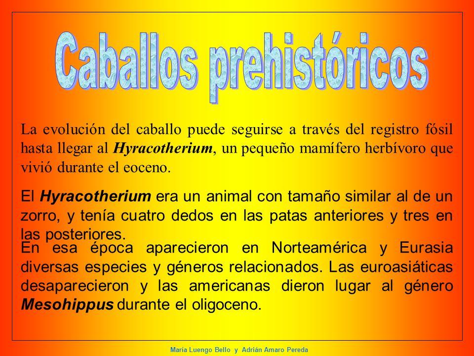 María Luengo Bello y Adrián Amaro Pereda La evolución del caballo puede seguirse a través del registro fósil hasta llegar al Hyracotherium, un pequeño