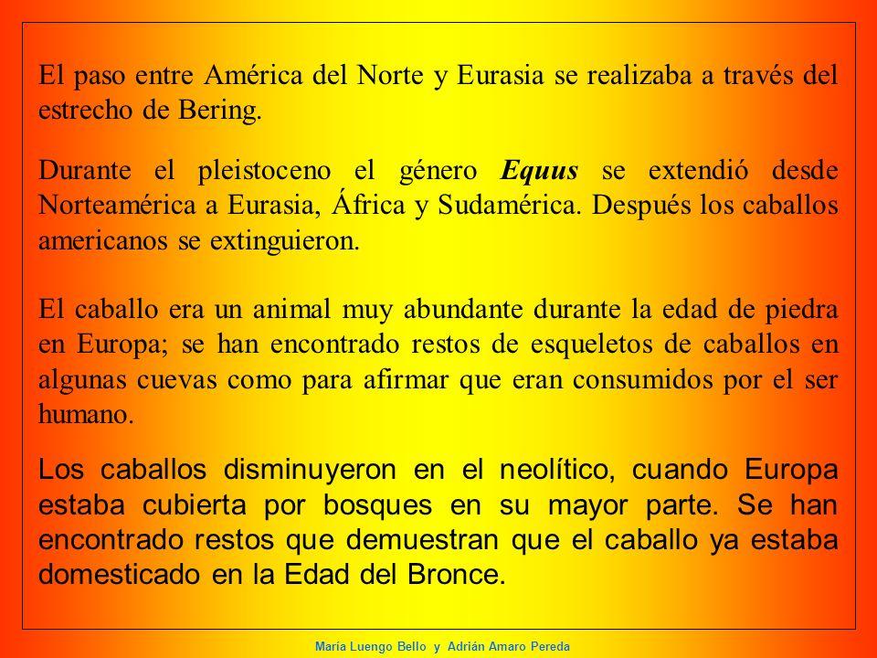 María Luengo Bello y Adrián Amaro Pereda El paso entre América del Norte y Eurasia se realizaba a través del estrecho de Bering. Durante el pleistocen