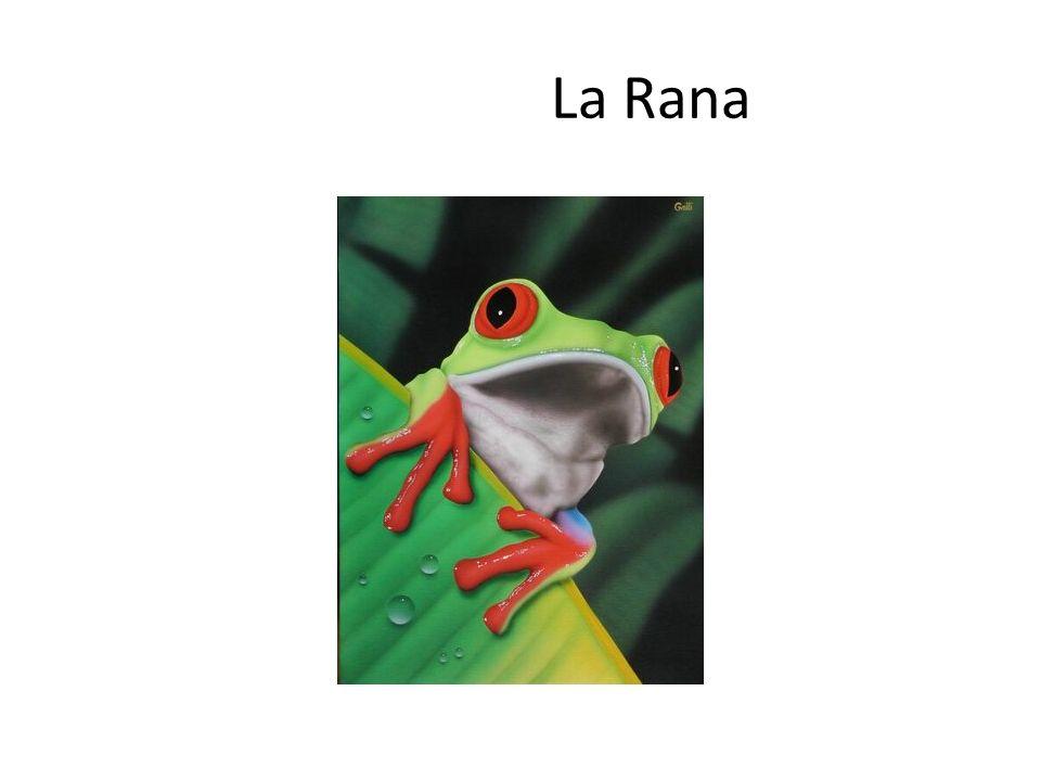 Oídos como sintonizadores Un equipo de investigadores ha descubierto que una rana que vive cerca de los manantiales ruidosos en una zona de China central, puede utilizar sus oídos como sintonizadores para captar selectivamente diferentes frecuencias sonoras, pasando de una a otra a voluntad, de la misma manera que con el sintonizador de una radio podemos cambiar de una frecuencia a otra.