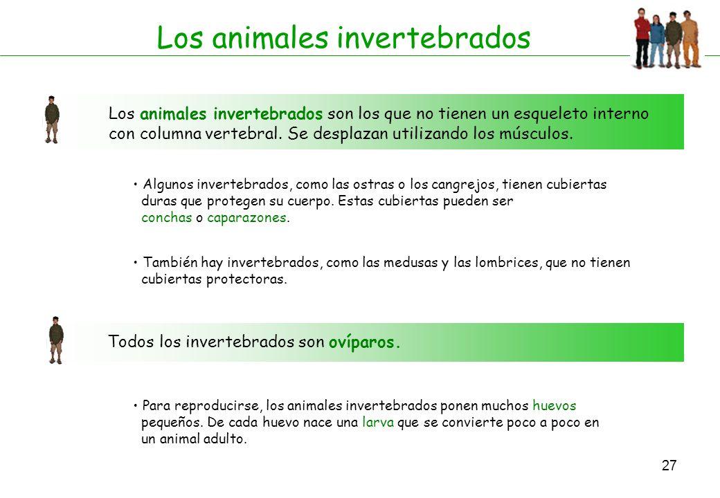 27 Los animales invertebrados Los animales invertebrados son los que no tienen un esqueleto interno con columna vertebral. Se desplazan utilizando los