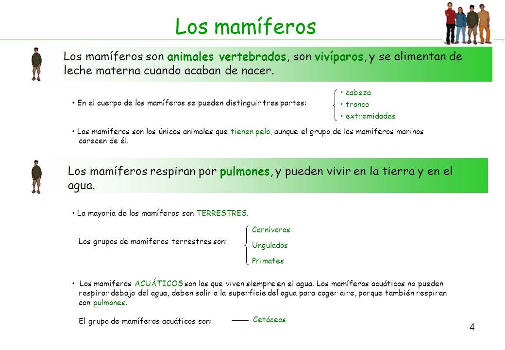 5 Mamíferos 10