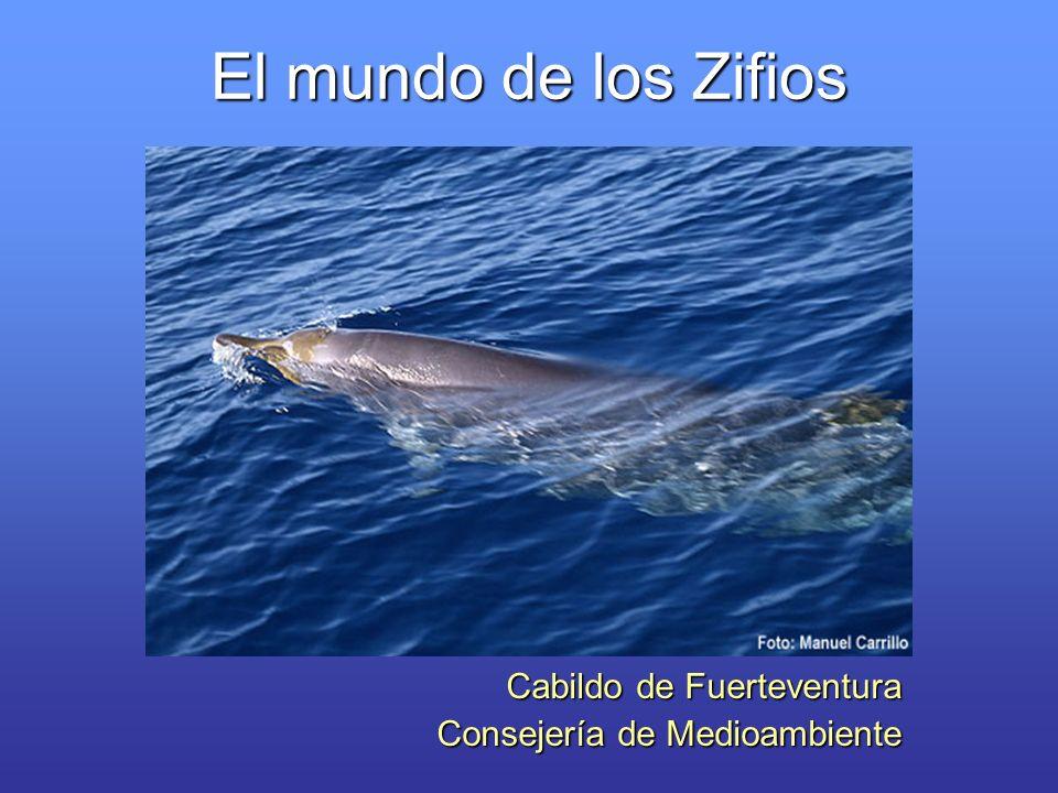 El mundo de los Zifios Cabildo de Fuerteventura Consejería de Medioambiente