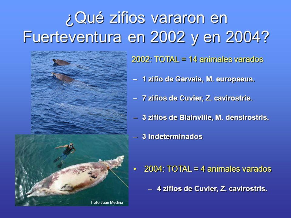 2002: TOTAL = 14 animales varados 2002: TOTAL = 14 animales varados –1 zifio de Gervais, M. europaeus. –7 zifios de Cuvier, Z. cavirostris. –3 zifios