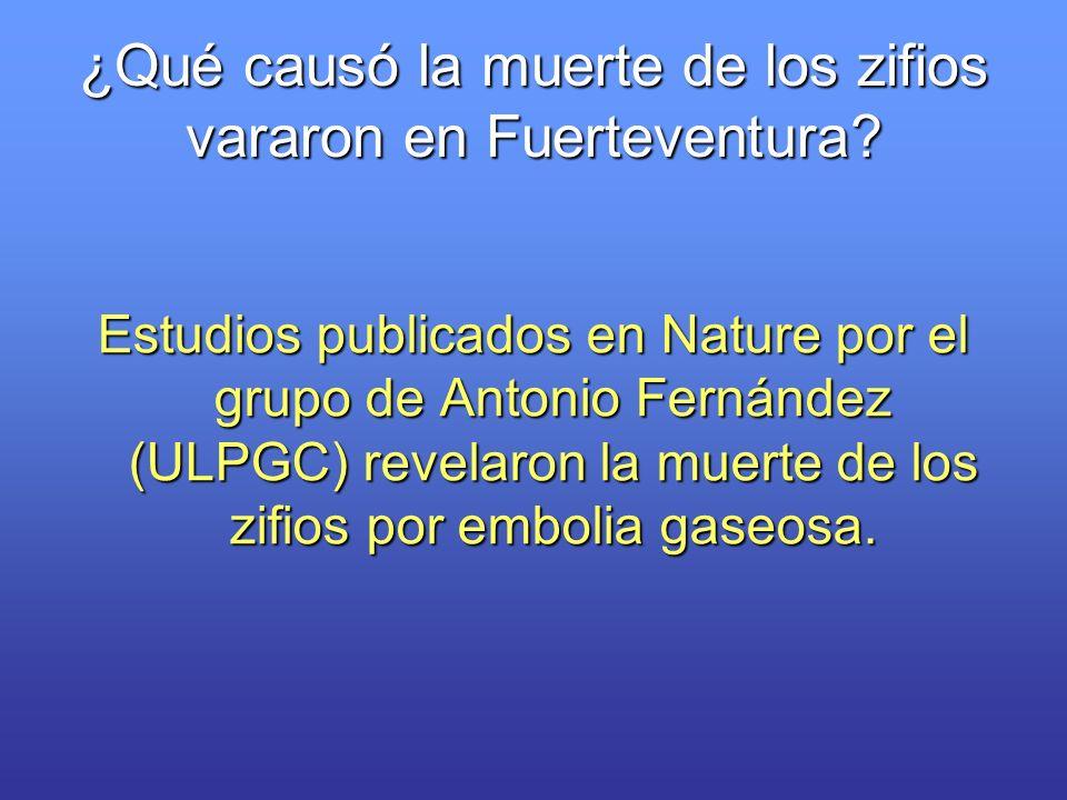 Estudios publicados en Nature por el grupo de Antonio Fernández (ULPGC) revelaron la muerte de los zifios por embolia gaseosa. ¿Qué causó la muerte de