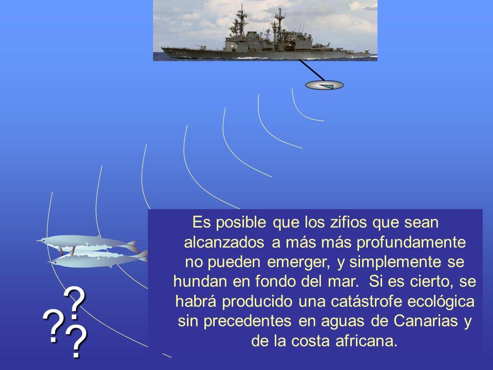 ? ? ? Es posible que los zifios que sean alcanzados a más más profundamente no pueden emerger, y simplemente se hundan en fondo del mar. Si es cierto,