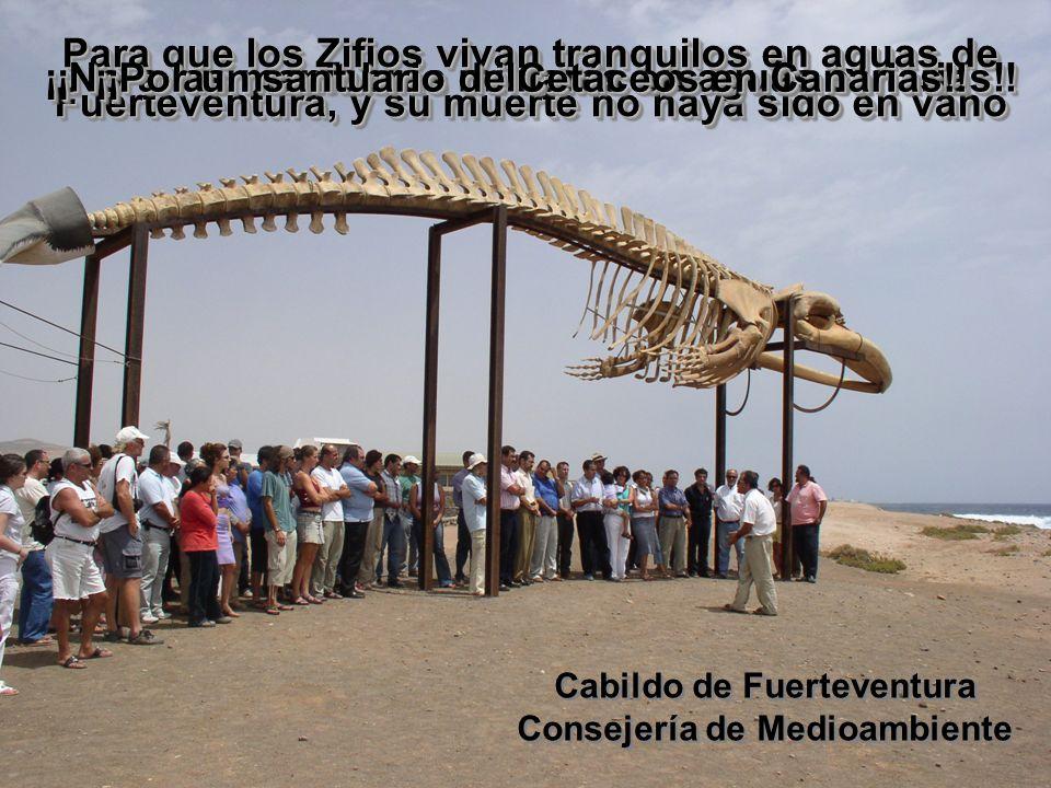 Para que los Zifios vivan tranquilos en aguas de Fuerteventura, y su muerte no haya sido en vano Cabildo de Fuerteventura Consejería de Medioambiente