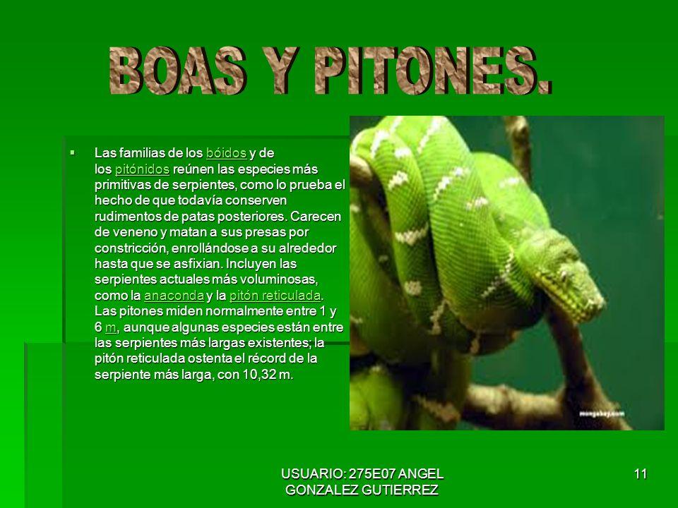 USUARIO: 275E07 ANGEL GONZALEZ GUTIERREZ 11 Las familias de los bóidos y de los pitónidos reúnen las especies más primitivas de serpientes, como lo prueba el hecho de que todavía conserven rudimentos de patas posteriores.