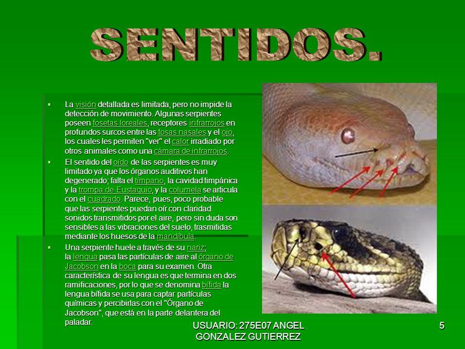 USUARIO: 275E07 ANGEL GONZALEZ GUTIERREZ 6 La mayoría de las serpientes se reproducen poniendo huevos, pero algunas especies han desarrollado un método diferente.