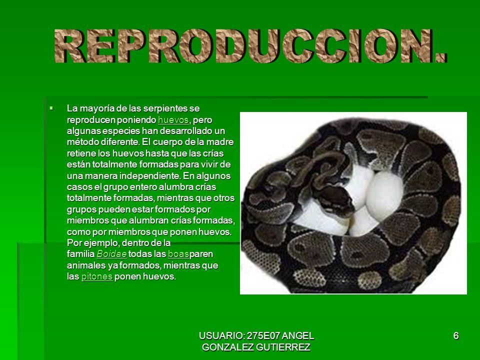 USUARIO: 275E07 ANGEL GONZALEZ GUTIERREZ 7 Muchas especies usan veneno para inmovilizar o matar a sus presas.