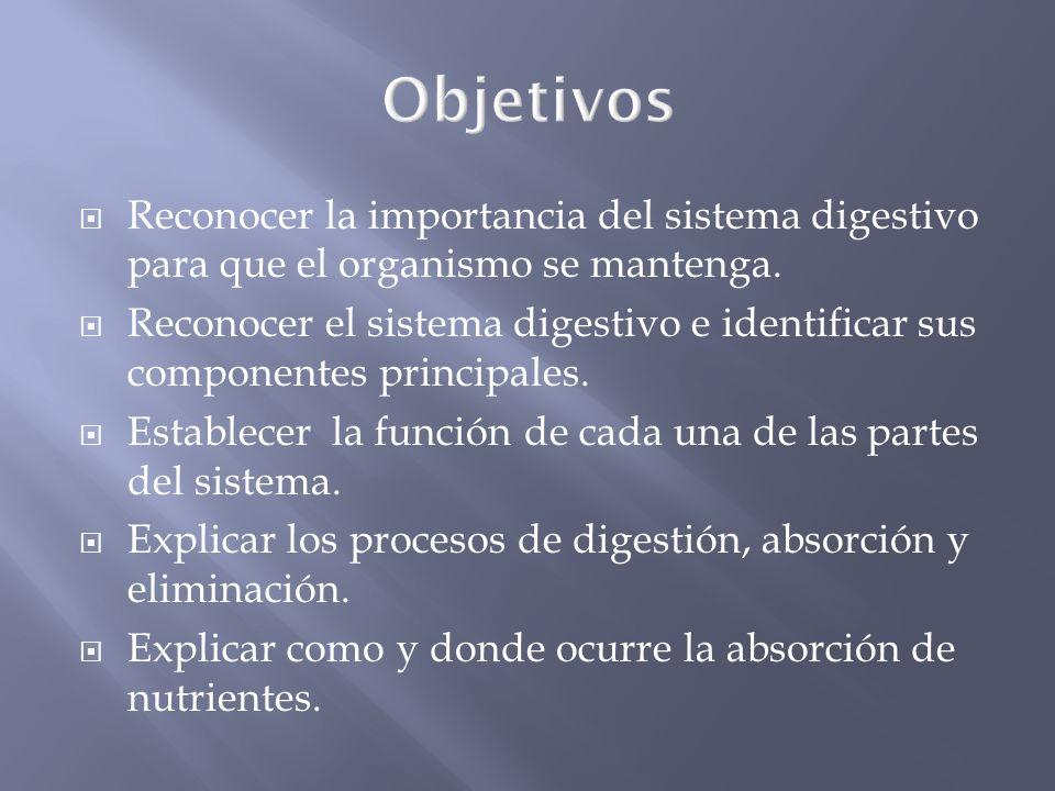 La estructura y niveles de organización.Idea Fundamental.