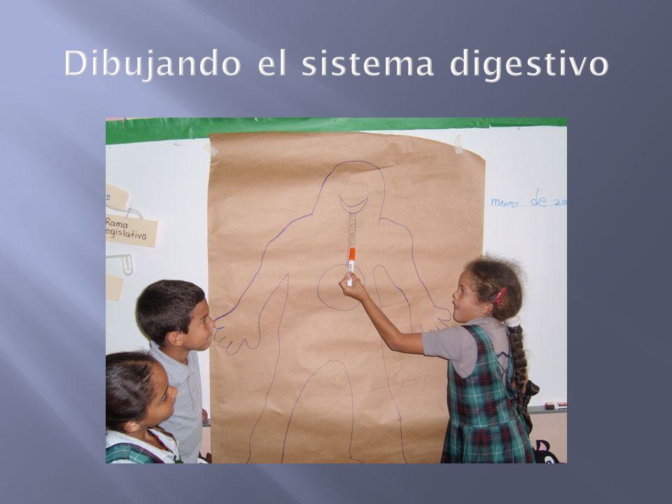 Dibujando el sistema digestivo