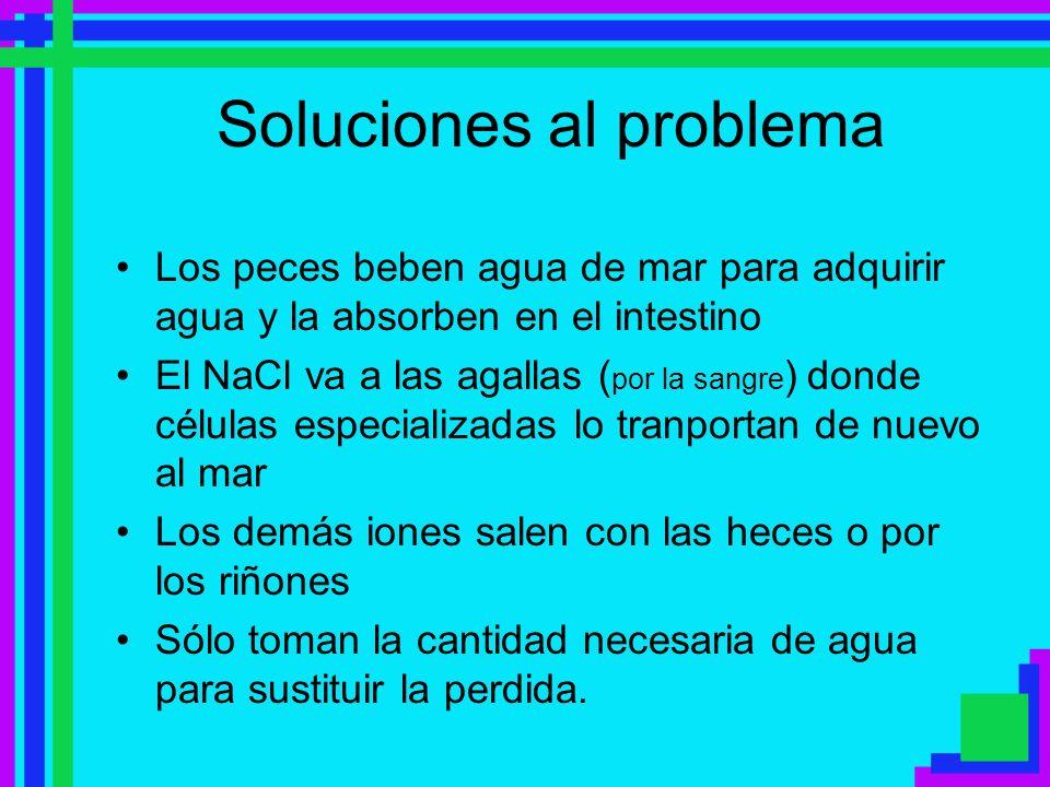Soluciones al problema Los peces beben agua de mar para adquirir agua y la absorben en el intestino El NaCl va a las agallas ( por la sangre ) donde c