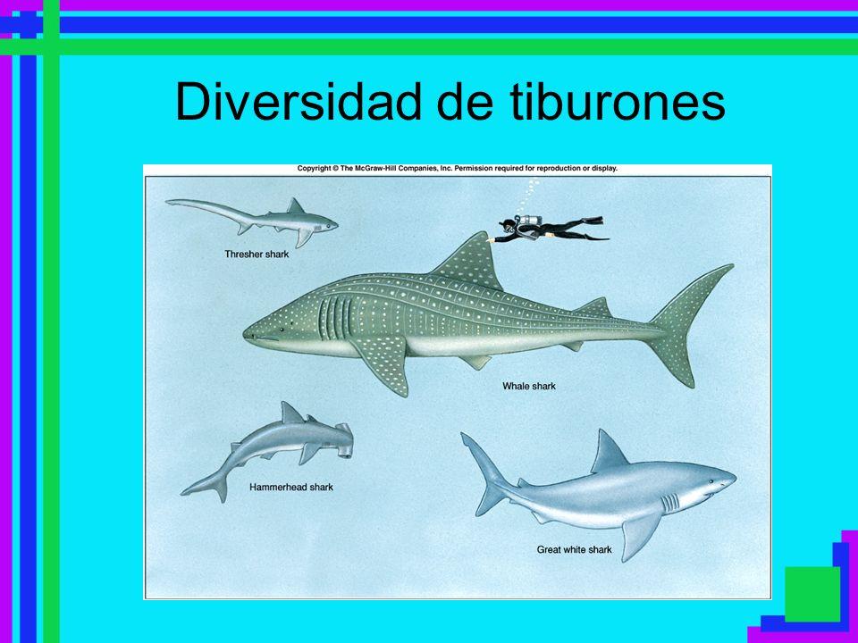 Diversidad de tiburones