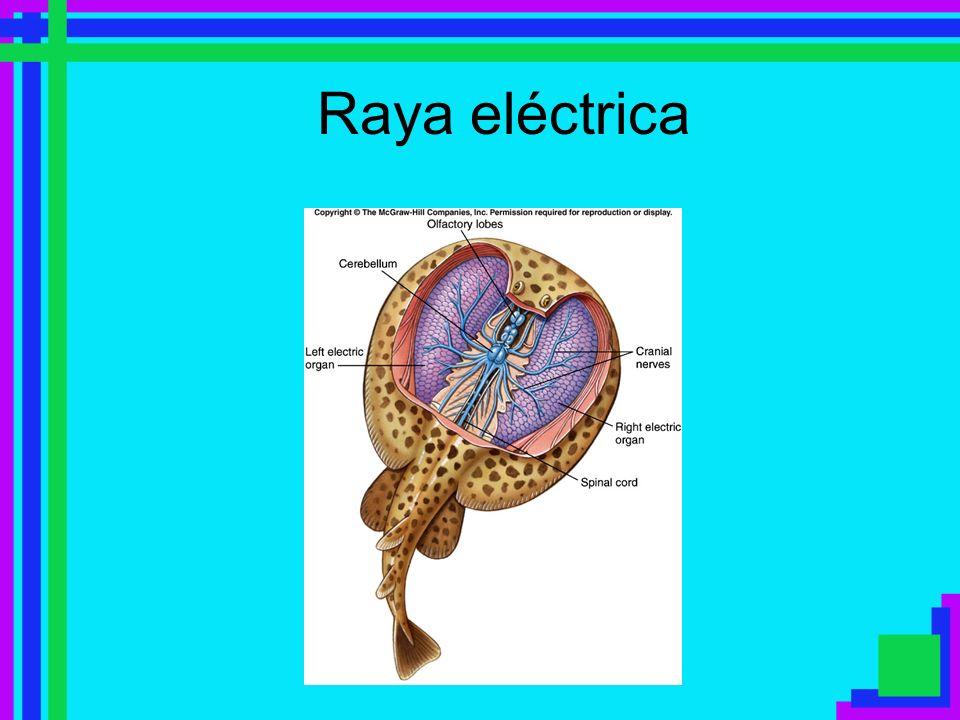 Raya eléctrica