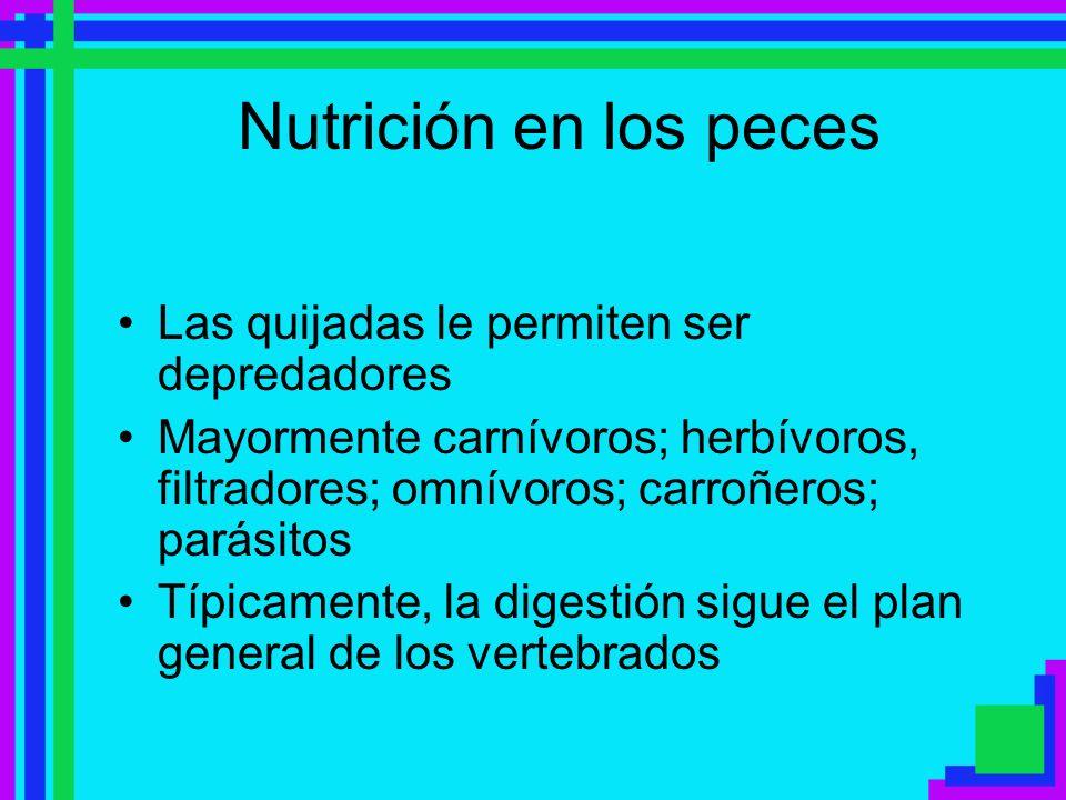 Nutrición en los peces Las quijadas le permiten ser depredadores Mayormente carnívoros; herbívoros, filtradores; omnívoros; carroñeros; parásitos Típi