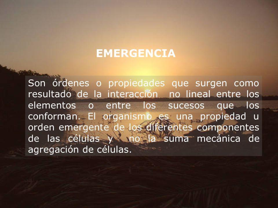 EMERGENCIA Son órdenes o propiedades que surgen como resultado de la interacción no lineal entre los elementos o entre los sucesos que los conforman.
