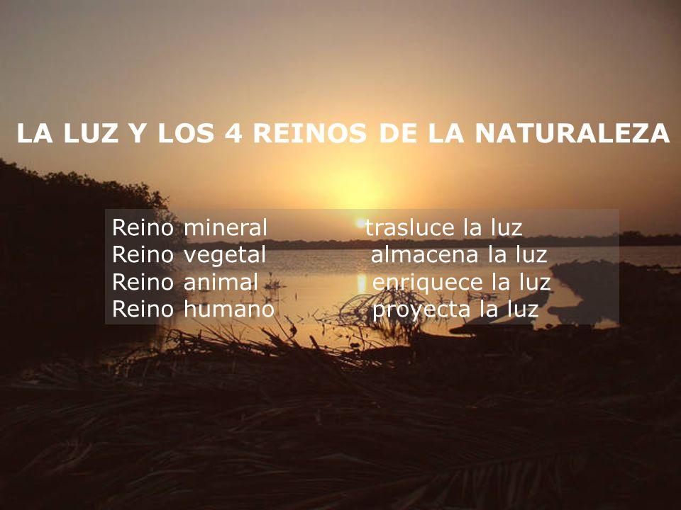 LA LUZ Y LOS 4 REINOS DE LA NATURALEZA Reino mineral trasluce la luz Reino vegetal almacena la luz Reino animal enriquece la luz Reino humano proyecta