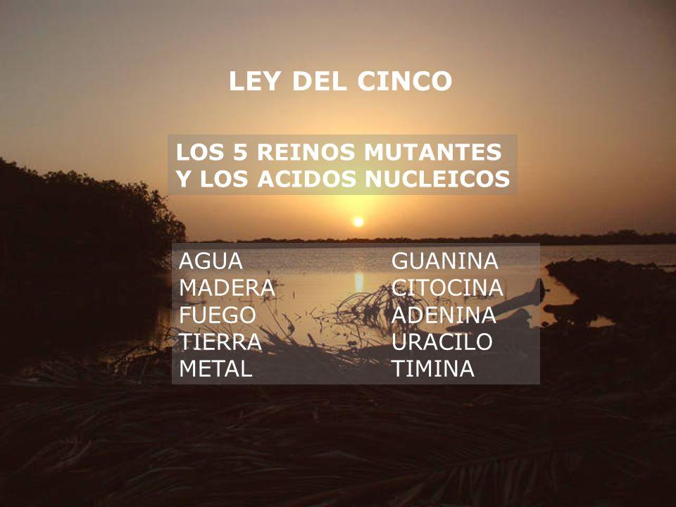 LEY DEL CINCO LOS 5 REINOS MUTANTES Y LOS ACIDOS NUCLEICOS AGUAGUANINA MADERACITOCINA FUEGOADENINA TIERRAURACILO METALTIMINA