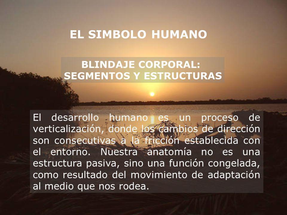 EL SIMBOLO HUMANO BLINDAJE CORPORAL: SEGMENTOS Y ESTRUCTURAS El desarrollo humano es un proceso de verticalización, donde los cambios de dirección son