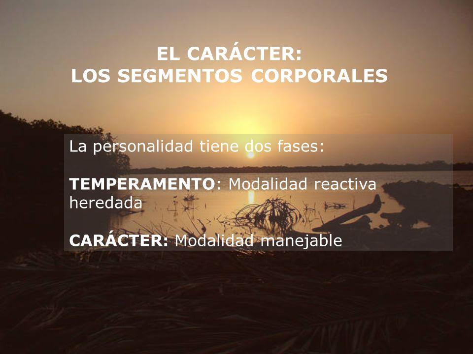 EL CARÁCTER: LOS SEGMENTOS CORPORALES La personalidad tiene dos fases: TEMPERAMENTO: Modalidad reactiva heredada CARÁCTER: Modalidad manejable