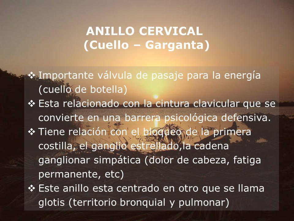 ANILLO CERVICAL (Cuello – Garganta) Importante válvula de pasaje para la energía (cuello de botella) Esta relacionado con la cintura clavicular que se