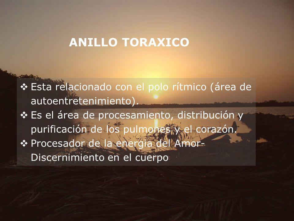 ANILLO TORAXICO Esta relacionado con el polo rítmico (área de autoentretenimiento). Es el área de procesamiento, distribución y purificación de los pu