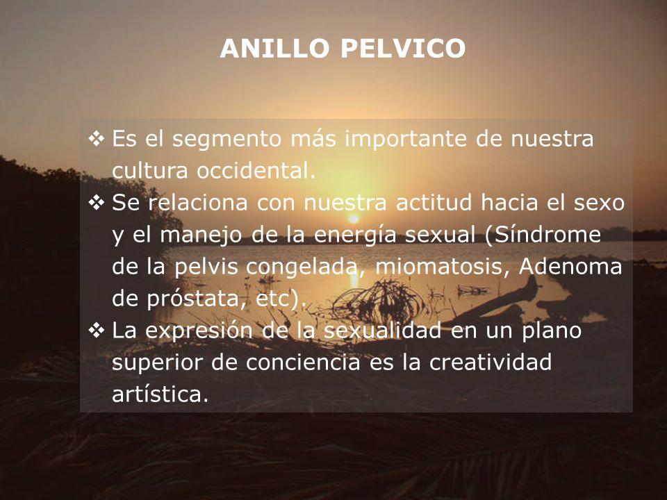 ANILLO PELVICO Es el segmento más importante de nuestra cultura occidental. Se relaciona con nuestra actitud hacia el sexo y el manejo de la energía s
