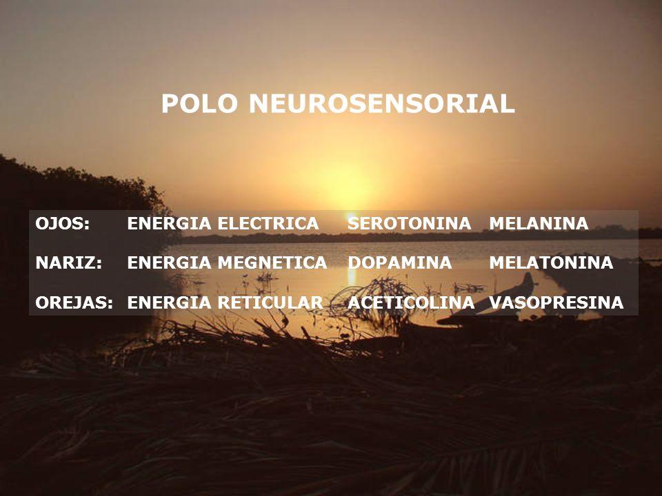 POLO NEUROSENSORIAL OJOS:ENERGIA ELECTRICASEROTONINAMELANINA NARIZ:ENERGIA MEGNETICADOPAMINAMELATONINA OREJAS:ENERGIA RETICULARACETICOLINAVASOPRESINA