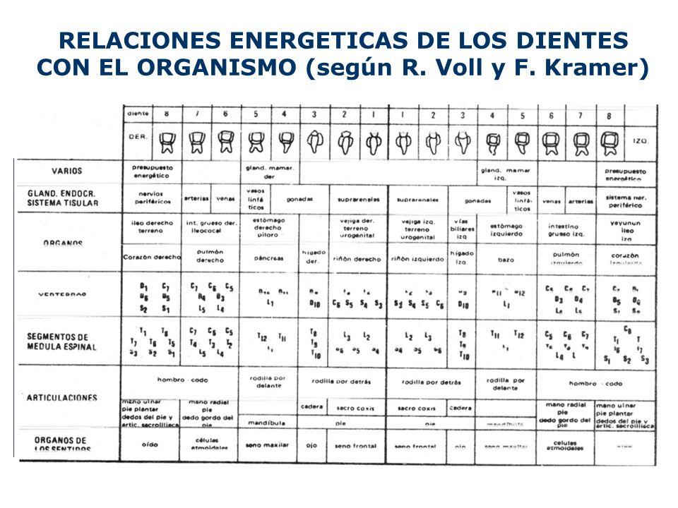 RELACIONES ENERGETICAS DE LOS DIENTES CON EL ORGANISMO (según R. Voll y F. Kramer)