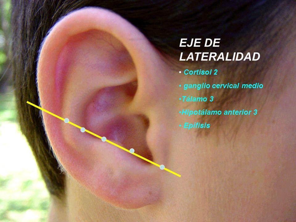 EJE DE LATERALIDAD Cortisol 2 ganglio cervical medio Tálamo 3 Hipotálamo anterior 3 Epífisis