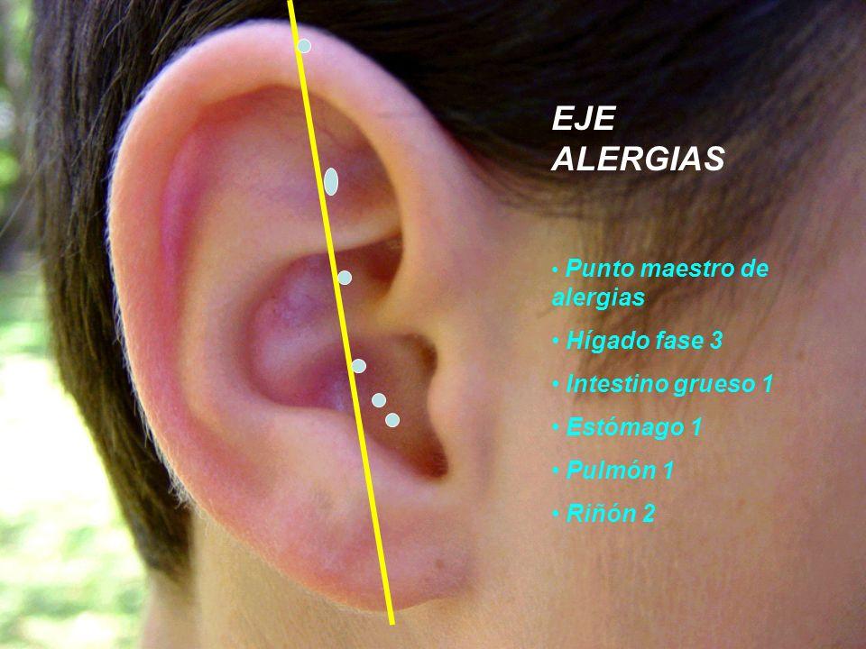 EJE ALERGIAS Punto maestro de alergias Hígado fase 3 Intestino grueso 1 Estómago 1 Pulmón 1 Riñón 2