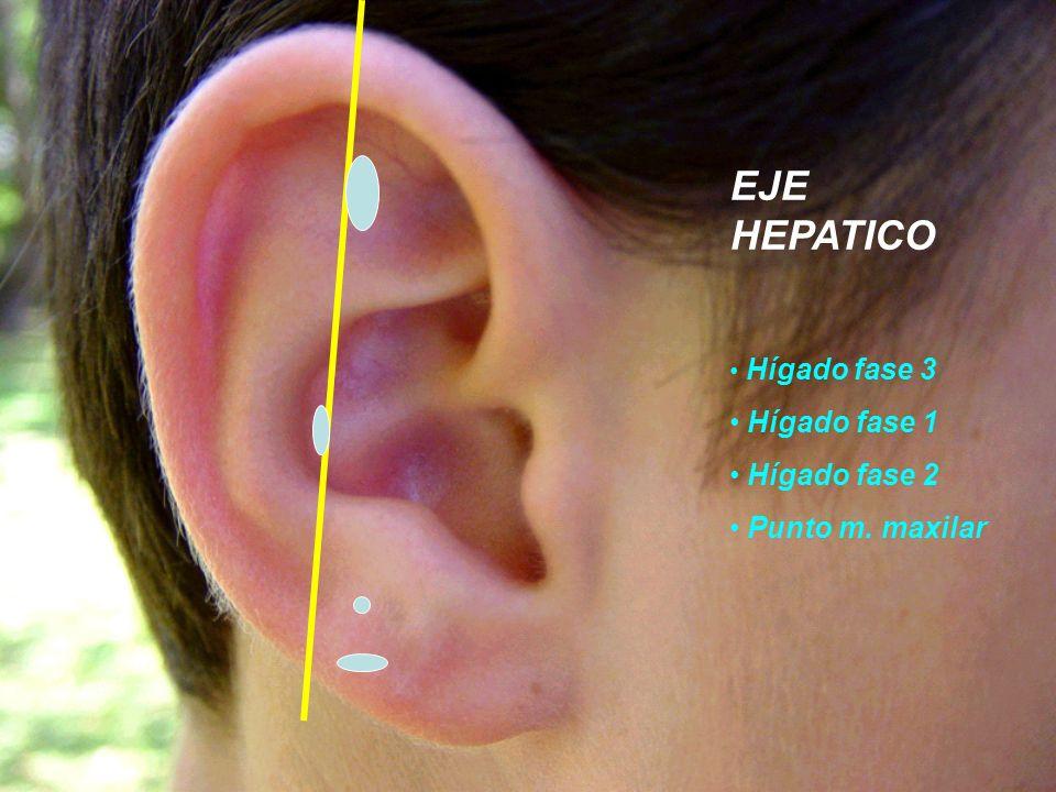 EJE HEPATICO Hígado fase 3 Hígado fase 1 Hígado fase 2 Punto m. maxilar