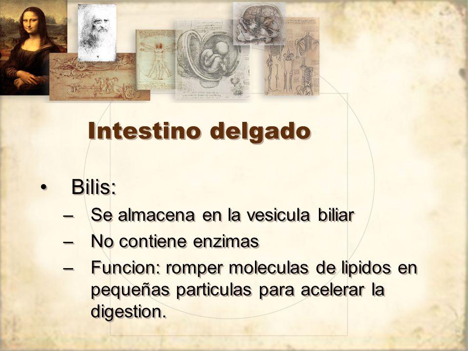 Intestino delgado Bilis: –Se almacena en la vesicula biliar –No contiene enzimas –Funcion: romper moleculas de lipidos en pequeñas particulas para acelerar la digestion.