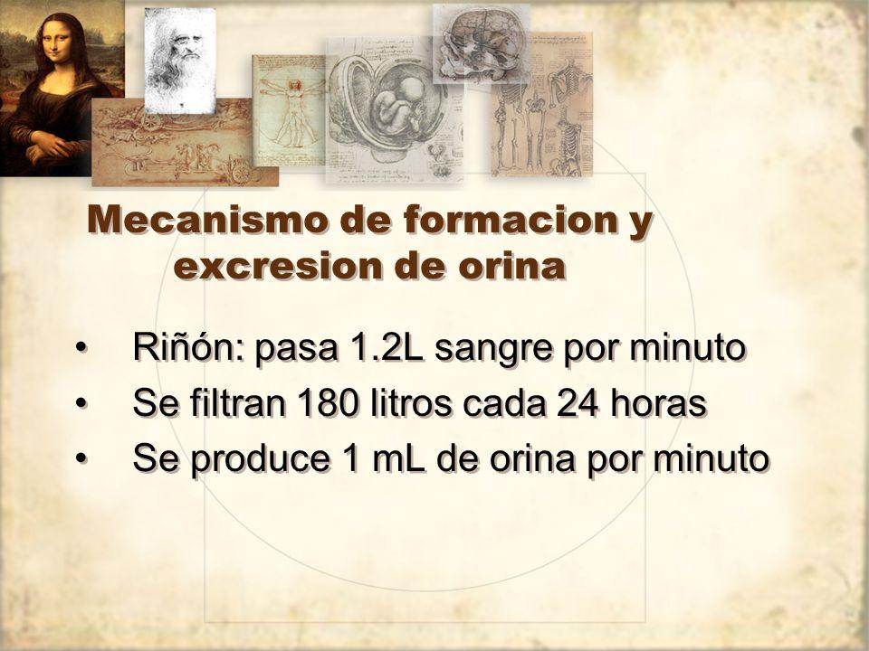 Mecanismo de formacion y excresion de orina Riñón: pasa 1.2L sangre por minuto Se filtran 180 litros cada 24 horas Se produce 1 mL de orina por minuto Riñón: pasa 1.2L sangre por minuto Se filtran 180 litros cada 24 horas Se produce 1 mL de orina por minuto