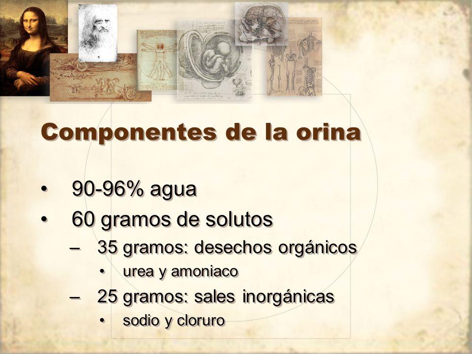 Componentes de la orina 90-96% agua 60 gramos de solutos –35 gramos: desechos orgánicos urea y amoniaco –25 gramos: sales inorgánicas sodio y cloruro 90-96% agua 60 gramos de solutos –35 gramos: desechos orgánicos urea y amoniaco –25 gramos: sales inorgánicas sodio y cloruro
