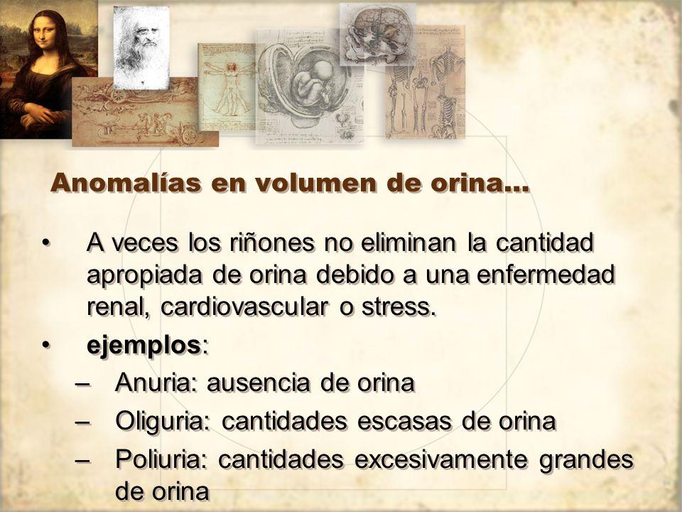Anomalías en volumen de orina… A veces los riñones no eliminan la cantidad apropiada de orina debido a una enfermedad renal, cardiovascular o stress.