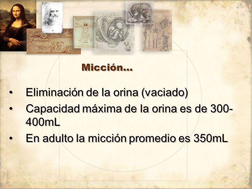 Micción… Eliminación de la orina (vaciado) Capacidad máxima de la orina es de 300- 400mL En adulto la micción promedio es 350mL Eliminación de la orina (vaciado) Capacidad máxima de la orina es de 300- 400mL En adulto la micción promedio es 350mL