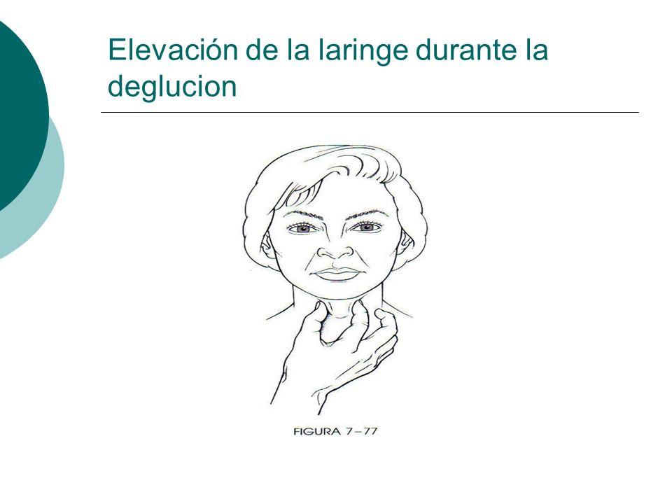 Elevación de la laringe durante la deglucion