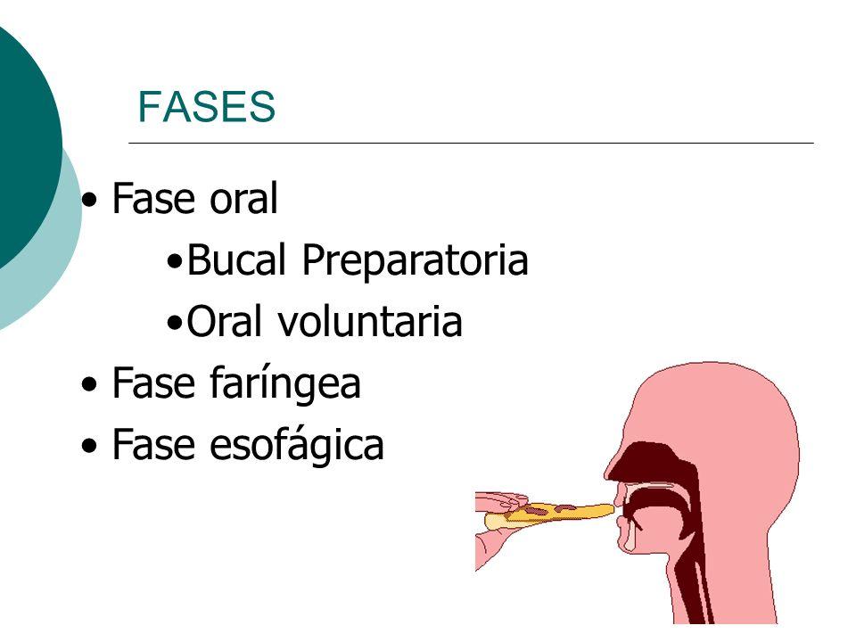 Fase oral Bucal Preparatoria Oral voluntaria Fase faríngea Fase esofágica FASES