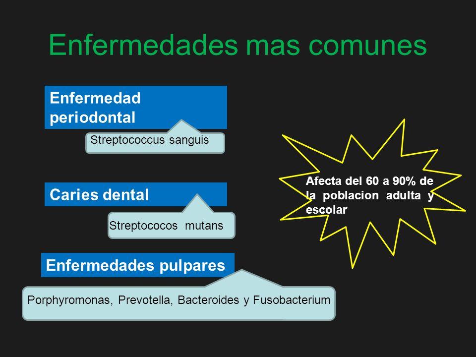 Enfermedades mas comunes Enfermedad periodontal Caries dental Streptococos mutans Enfermedades pulpares Porphyromonas, Prevotella, Bacteroides y Fusob