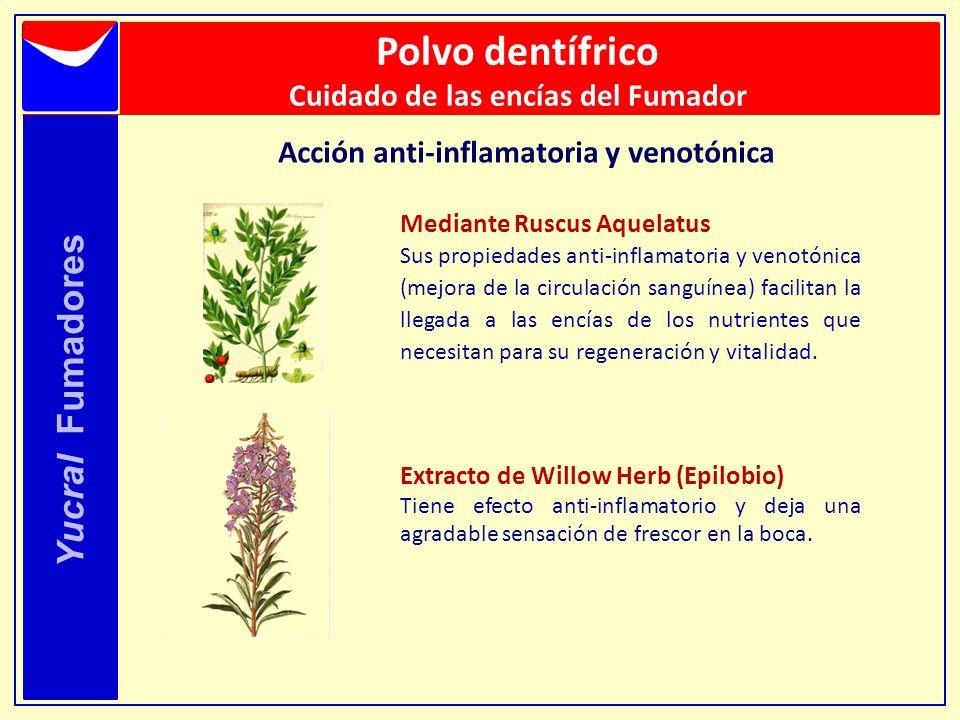 Yucral Fumadores Mediante Ruscus Aquelatus Sus propiedades anti-inflamatoria y venotónica (mejora de la circulación sanguínea) facilitan la llegada a