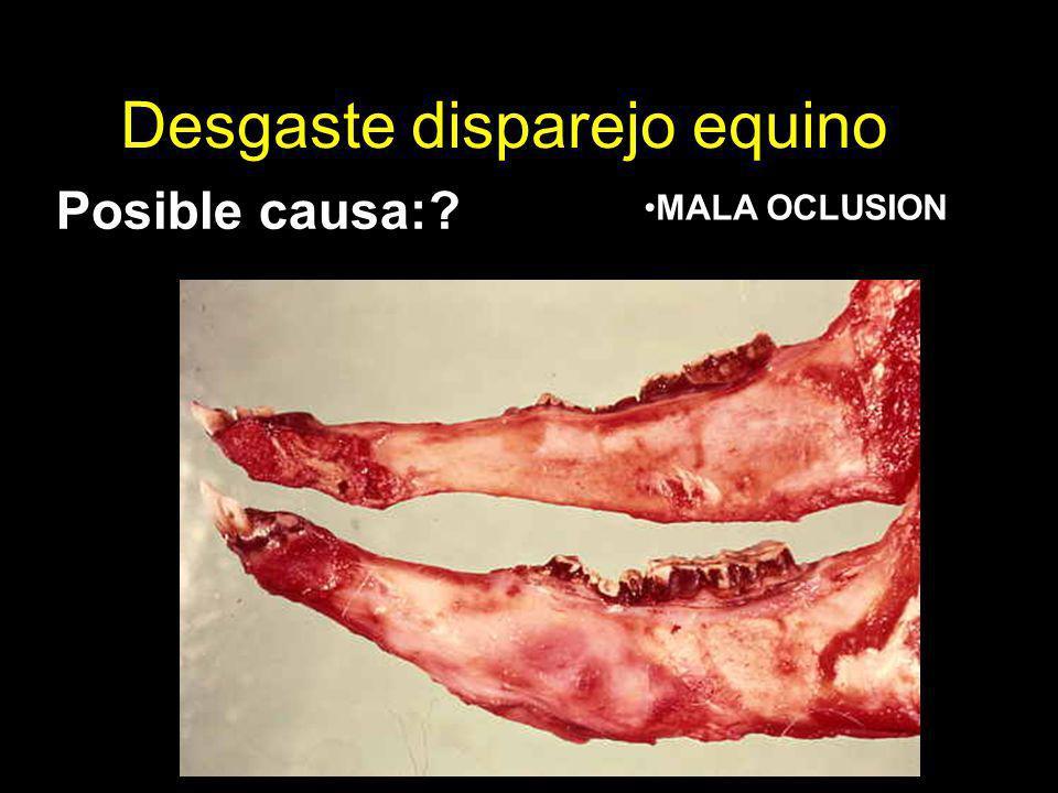 Desgaste disparejo equino Posible causa:? MALA OCLUSION