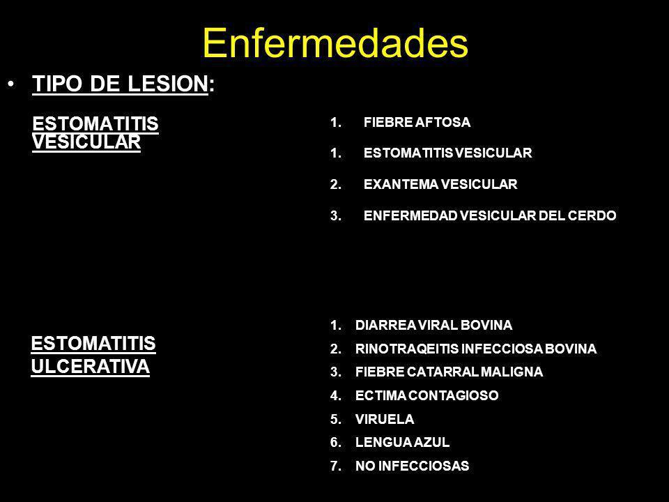 Enfermedades TIPO DE LESION: ESTOMATITIS VESICULAR 1.FIEBRE AFTOSA 1.ESTOMATITIS VESICULAR 2.EXANTEMA VESICULAR 3.ENFERMEDAD VESICULAR DEL CERDO ESTOM