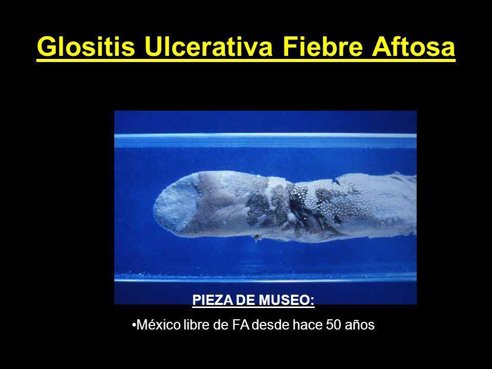 Glositis Ulcerativa Fiebre Aftosa PIEZA DE MUSEO: México libre de FA desde hace 50 años