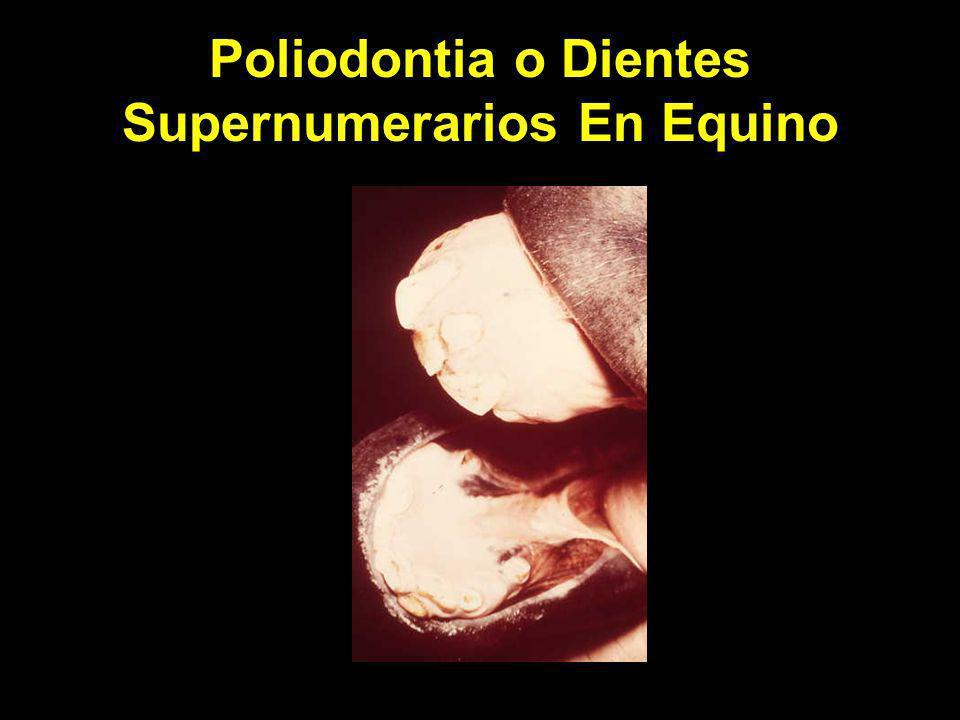 Poliodontia o Dientes Supernumerarios En Equino