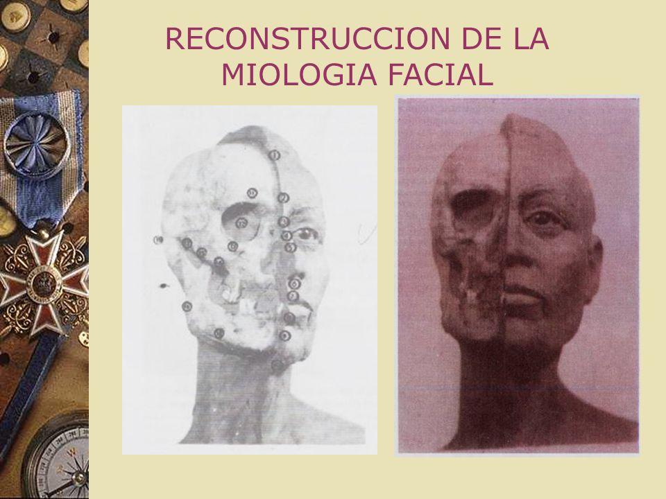 ANTROPOLOGÍA FORENSE Esta ciencia tiene como finalidad el estudio de los restos óseos esqueléticos, con objeto de llegar a la identificación personal
