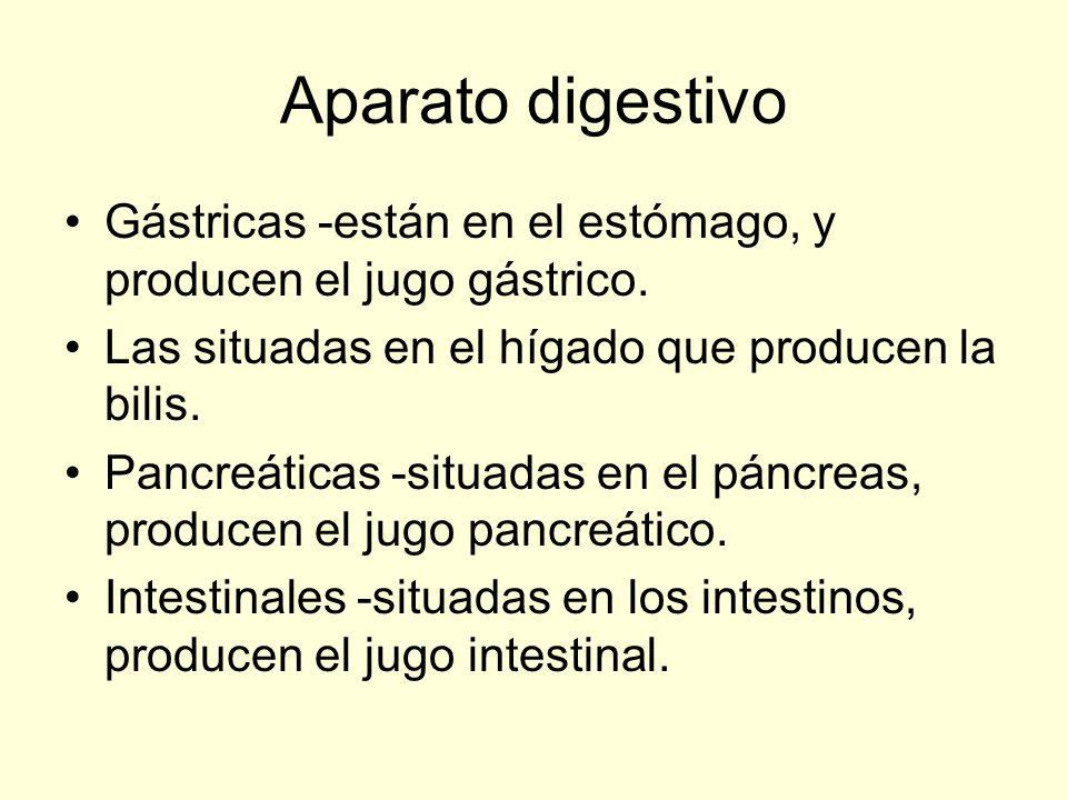 Aparato digestivo Gástricas -están en el estómago, y producen el jugo gástrico.