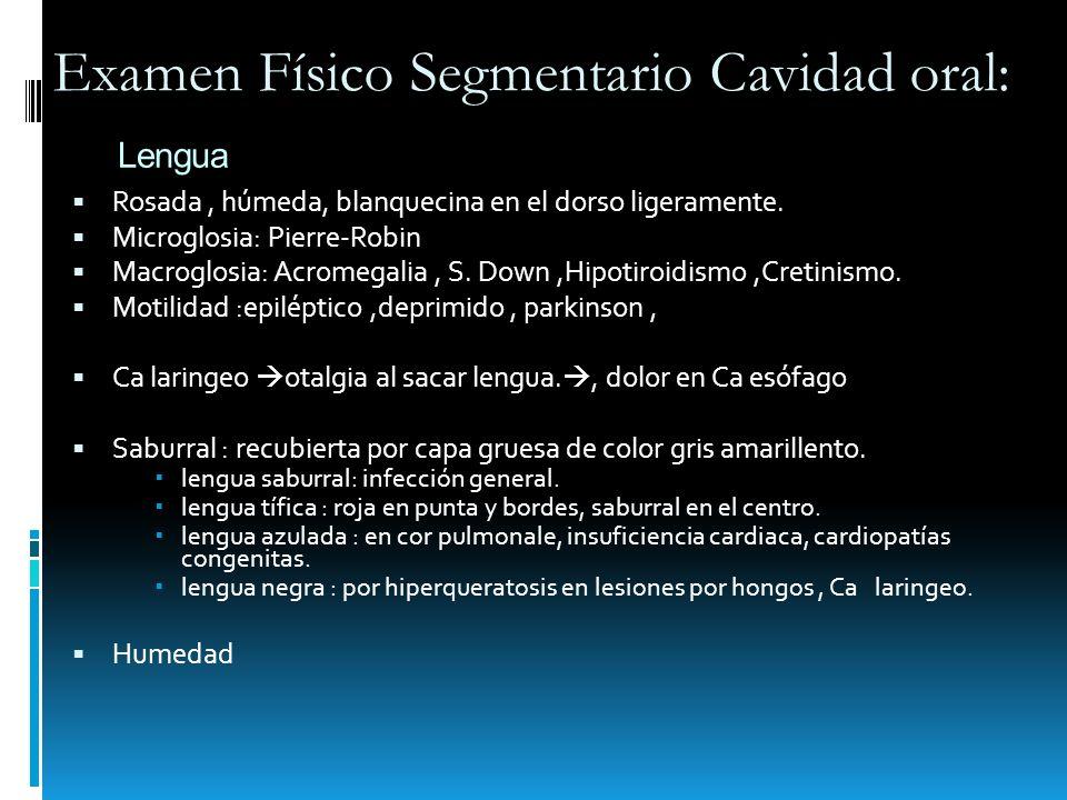 Lengua Rosada, húmeda, blanquecina en el dorso ligeramente. Microglosia: Pierre-Robin Macroglosia: Acromegalia, S. Down,Hipotiroidismo,Cretinismo. Mot