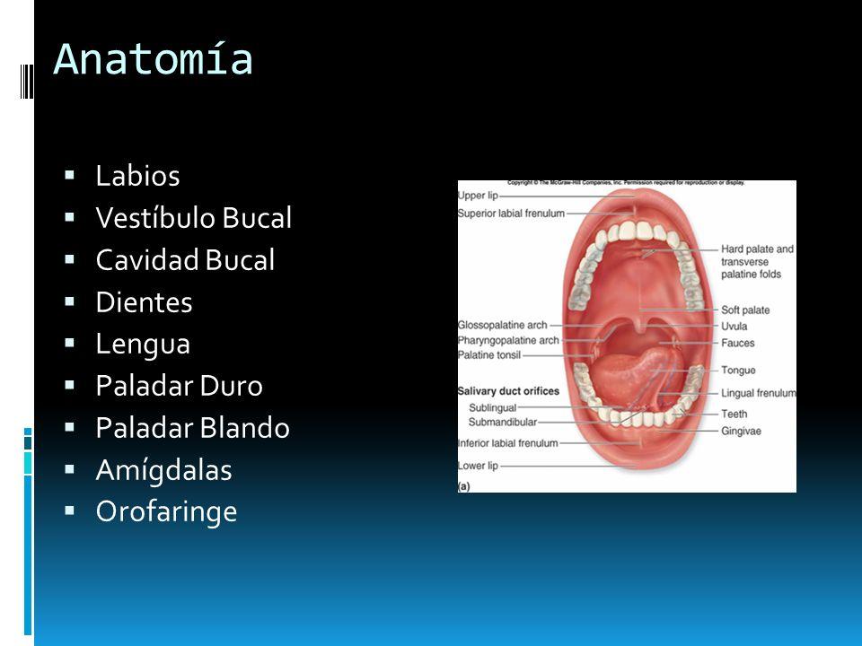 Anatomía Labios Vestíbulo Bucal Cavidad Bucal Dientes Lengua Paladar Duro Paladar Blando Amígdalas Orofaringe