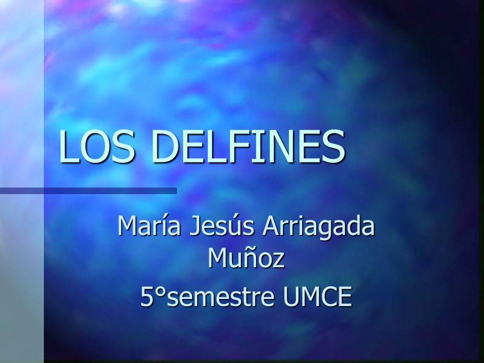 LOS DELFINES María Jesús Arriagada Muñoz 5°semestre UMCE